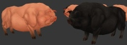 13_pigs
