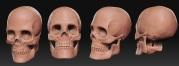 Skull_WIP_001